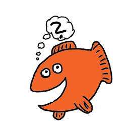 Wo ist der Fisch? Sushi!